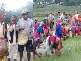 ढोल-दमाऊ और जागर गीतों के साथ ग्रामीणों ने की धान की अंंतिम रोपाई,पढ़ें रिपोर्ट।
